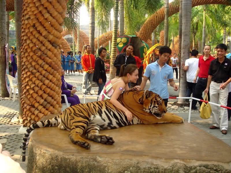 Tiger zoo - Pattaya